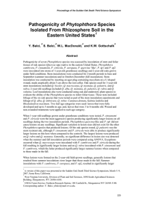 Phytophthora Isolated From Rhizosphere Soil in the Eastern United States