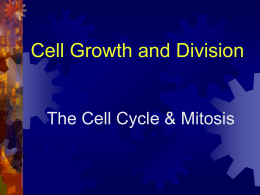 Cell Growth and Division The Cell Cycle & Mitosis