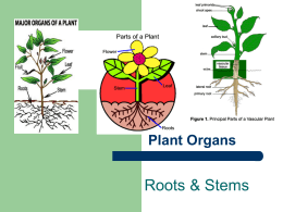 Roots & Stems Plant Organs