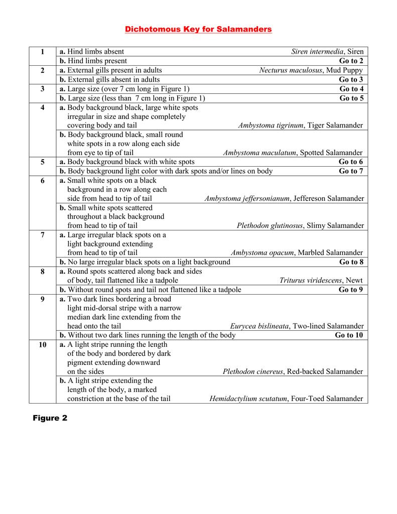 Worksheets Dichotomous Key Worksheet 100 dichotomous key worksheet paraphrasing worksheets 5th for salamanders 1 a