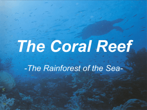 The Coral Reef -The Rainforest of the Sea-
