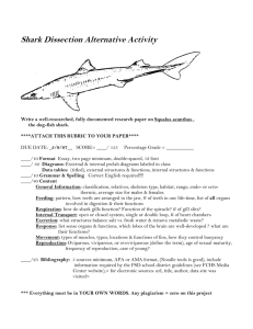 Shark Dissection Alternative Activity