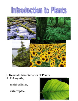 characteristics of plants A plant is a multicellular, autotrophic living organism capable of photosynthesis, adapted to living on land, and belongs to the kingdom plantae planta or plantae is also the latin word for plant, sprout, shoot, slip, young plant, seedling, sole and foot (kidd 1957 traupman 1995.