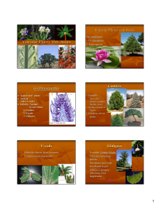 Vascular Plants with Seeds Gymnosperms Conifers Two main types
