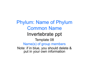 Phylum: Name of Phylum Common Name Invertebrate ppt Template 08