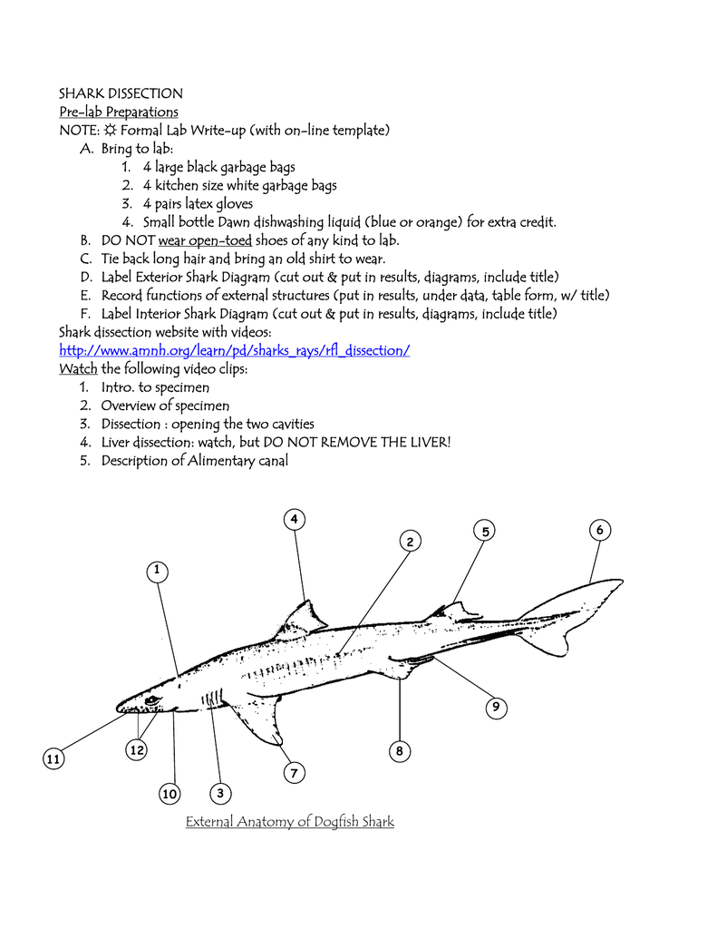worksheet Shark Dissection Worksheet 100 dogfish anatomy and dissection  guide bird heart shark worksheet worksheets reviewrevitol