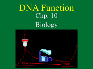 DNA Function Chp. 10 Biology