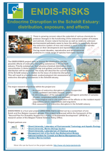 ENDIS-RISKS Endocrine Disruption in the Scheldt Estuary: distribution, exposure, and effects