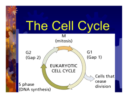 Chapter 9: Cellular Reproduction