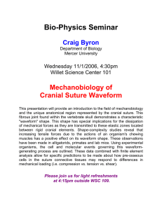 Bio-Physics Seminar  Mechanobiology of Cranial Suture Waveform