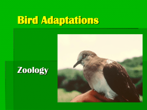 Bird Adaptations Zoology