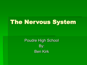 The Nervous System Poudre High School By: Ben Kirk