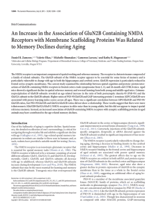An Increase in the Association of GluN2B Containing NMDA