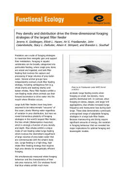Prey density and distribution drive the three-dimensional foraging
