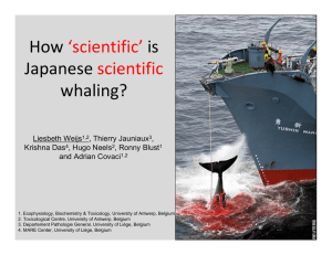 How  is  Japanese  whaling?