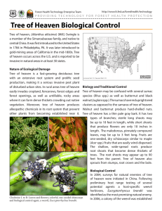 Tree of Heaven Biological Control