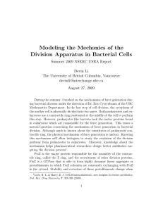 Modeling the Mechanics of the Division Apparatus in Bacterial Cells