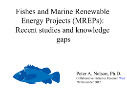 Fishes and Marine Renewable Energy Projects (MREPs): Recent studies and knowledge gaps