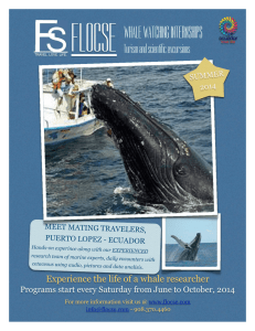 FLOCSE WHALE WATCHING INTERNSHIPS Turism and scientific excursions