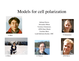 Models for cell polarization
