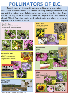 Female bees are the most important pollinators in our region.