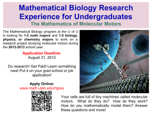 Mathematical Biology Research Experience for Undergraduates The Mathematics of Molecular Motors