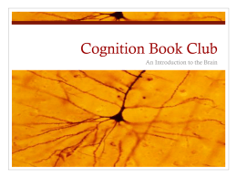 Cognition Book Club An Introduction to the Brain
