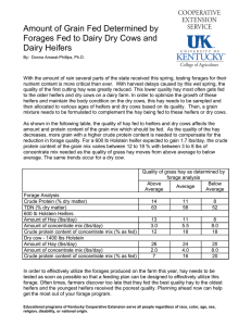 Amount of Grain Fed Determined by Dairy Heifers