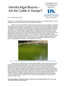 Harmful Algal Blooms – Are My Cattle in Danger?