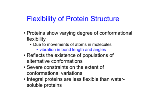 Flexibility of Protein Structure
