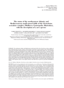 The status of the northeastern Atlantic and Ocinebrina aciculata