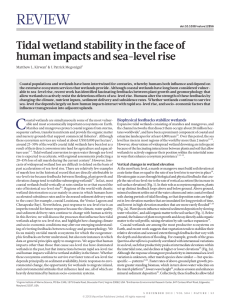 C Biophysical feedbacks stabilize wetlands