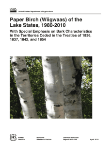 Paper Birch (Wiigwaas) of the Lake States, 1980-2010
