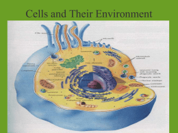 Cells and Their Environment Chapter 4 p 74-84