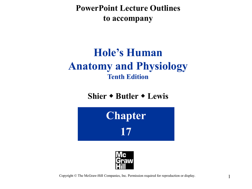 Hole\'s Human Anatomy and Physiology Chapter 17