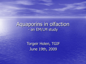 Aquaporins in olfaction - an EM/LM study Torgeir Holen, TGIF June 19th, 2009