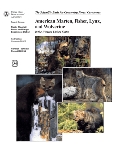 American Marten, Fisher, Lynx, and Wolverine in the Western United States