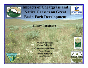 Impacts of Cheatgrass and Native Grasses on Great Basin Forb Development Hilary Parkinson