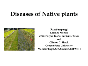 Diseases of Native plants
