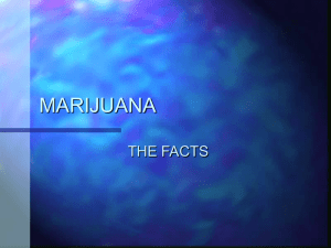 MARIJUANA THE FACTS