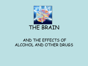 THE BRAIN AND THE EFFECTS OF ALCOHOL AND OTHER DRUGS