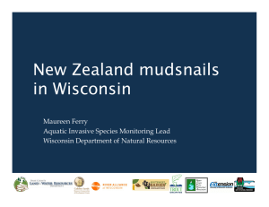 New Zealand mudsnails in Wisconsin Maureen Ferry Aquatic Invasive Species Monitoring Lead