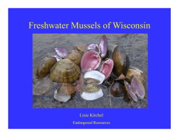 Freshwater Mussels of Wisconsin Lisie Kitchel Endangered Resources