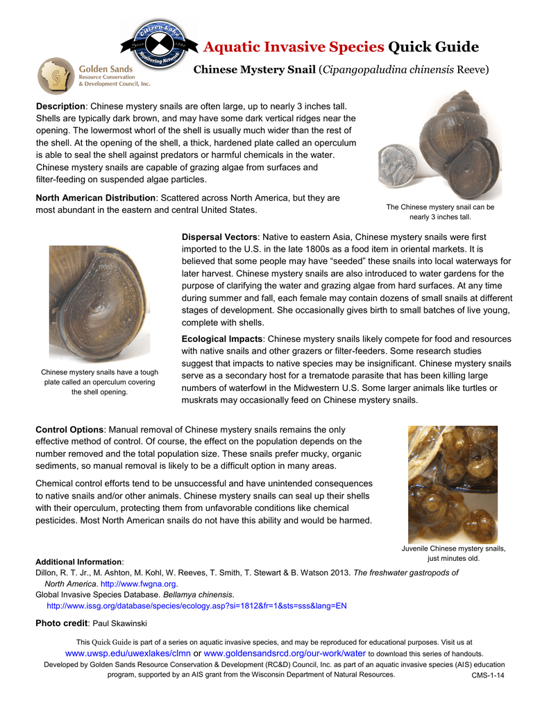 Finally In First Snail Study Manual Guide