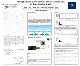 Photophysical Characterization of Fluorescent Labels for DNA Binding Studies