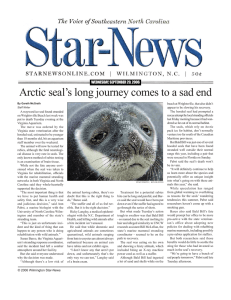 Arctic seal's long journey comes to a sad end