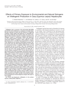 Effects of Primary Exposure to Environmental and Natural Estrogens (Cyprinus carpio)