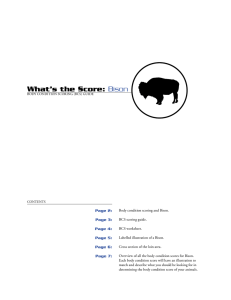 What's the Score: Bison Page 2: Page 3: