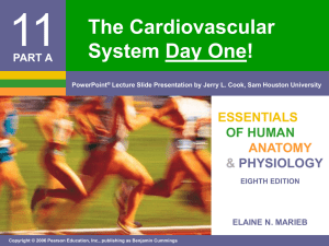 11 The Cardiovascular System Day One! ESSENTIALS