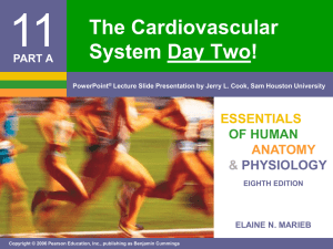 11 The Cardiovascular System Day Two! ESSENTIALS